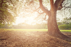 完善的树和日落在公园 库存照片