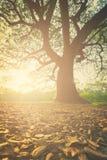 完善的树和日落在公园 免版税图库摄影