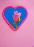 完善的爱的桃红色玫瑰 免版税图库摄影