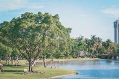 完善的自然和大树在公园 免版税库存照片