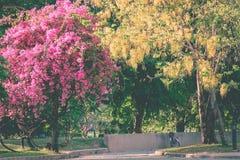 完善的自然和大树在公园 免版税库存图片