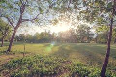 完善的自然和日落在公园 库存图片