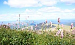 完善的花和山 库存图片