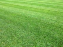 完善的草坪绿草背景 库存照片