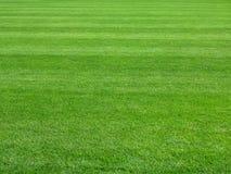 完善的草坪绿草背景 免版税库存照片