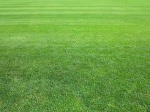 完善的草坪绿草背景 库存图片