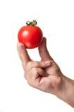 完善的蕃茄,在手指之间的举行 库存图片