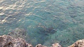 完善的水在Salento 免版税库存图片