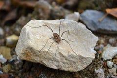 宏指令我的蜘蛛世界 图库摄影