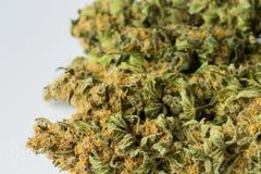 宏指令接近一棵干大麻医疗大麻植物与 库存照片