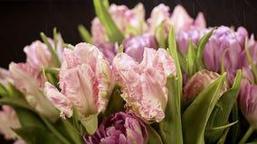 宏指令 宏观射击 飞溅水飞行在光在郁金香美丽的花束  浅粉红色郁金香花开花 股票录像