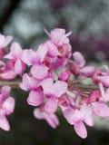 宏指令-花-紫色结构树 库存照片