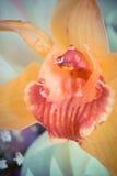 宏指令一三朵兰花花束的兰花特写镜头在木背景概念生日美妙地装饰的开花 库存图片