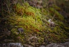 宏指令 狂放的森林开花的青苔 免版税图库摄影