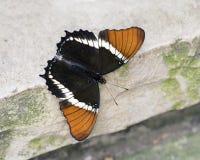 宏指令生锈被打翻的页刷子有脚的蝴蝶 库存图片