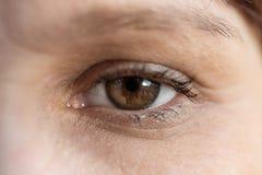宏指令的布朗女性眼睛关闭 免版税库存照片