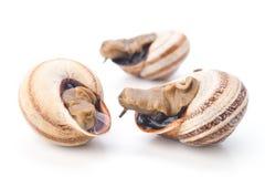 宏指令采取在白色的三只蜗牛 免版税库存图片