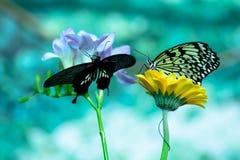 宏观两只的蝴蝶 免版税库存图片