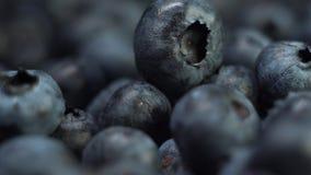 宏观关闭新鲜的鲜美蓝莓或可口蓝莓在阳光极端关闭 股票录像
