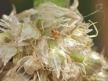宏观关闭蜘蛛int他从事园艺,在英国拍的照片 库存图片