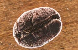 宏观咖啡豆 图库摄影