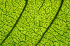 宏观图片绿色叶子纹理 库存照片