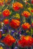 宏观在绿草的花红色黄色鸦片 特写镜头绘画的片段 帆布,油,调色刀 抽象花 文本 免版税库存照片