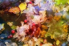 宏观多彩多姿的橡木叶子秋天照片  免版税图库摄影