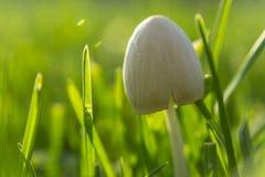 宏观射击 在绿草的森林蘑菇 会集蘑菇 免版税库存照片