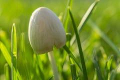宏观射击 在绿草的森林蘑菇 会集蘑菇 库存图片
