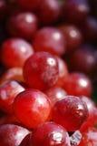 宏观庭院的葡萄 库存照片