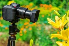 宏观摄影本质上 花和植物 背景被弄脏的绿色 免版税库存图片