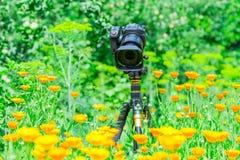 宏观摄影本质上 花和植物 背景被弄脏的绿色 免版税库存照片