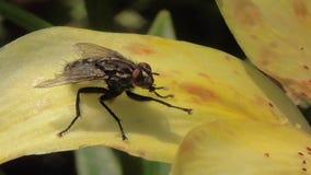 宏观昆虫在他们的自然生态环境 影视素材