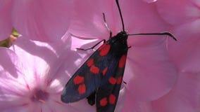 宏观昆虫在他们的自然生态环境 股票视频