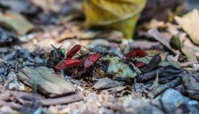宏观昆虫 免版税库存图片
