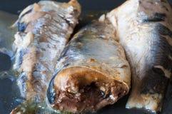宏观沙丁鱼 库存图片