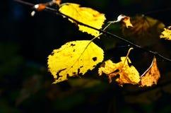 宏观照片下落的叶子在秋天森林里, 免版税图库摄影