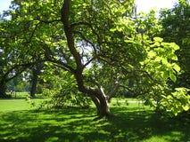 宏观照片有夏天晴天装饰风景背景在圣Susi老历史公园在波茨坦 库存图片