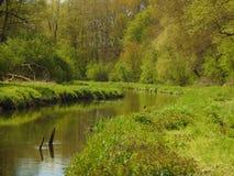 宏观照片有森林河和欧洲人植被的风景背景,不同的绿色树荫树和草  免版税库存图片
