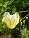 宏观照片有美丽的花装饰背景和纹理与白色瓣的在绿草 免版税库存图片