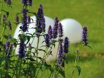 宏观照片有街道白色圆的光和美丽的庭院装饰背景开花与紫色颜色树荫的瓣 库存图片