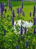宏观照片有街道白色圆的光和美丽的庭院装饰背景开花与紫色颜色树荫的瓣 库存照片