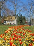 宏观照片有装饰五颜六色的背景在春天绽放的期间 免版税库存照片
