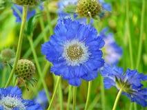 宏观照片有装饰庭院花背景与瓣的在蓝色颜色树荫下  库存图片