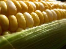 宏观玉米的kernals 免版税库存照片