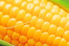 宏观甜黄色的玉米棒子 免版税图库摄影