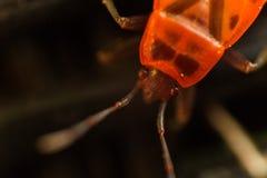 宏观甲虫 免版税库存图片