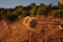 宏观的沙漠植物 免版税库存照片