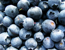 宏观的蓝莓 免版税库存照片